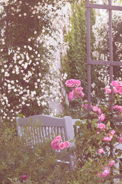 Photograph - Romantic Rose Garden 3 by Jenny Rainbow