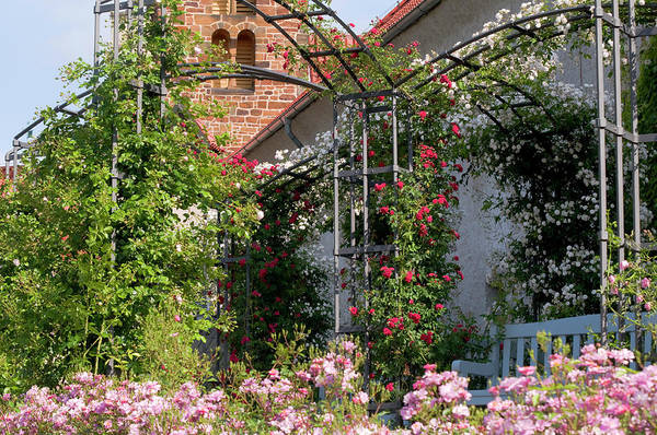 Photograph - Romantic Rose Garden by Jenny Rainbow