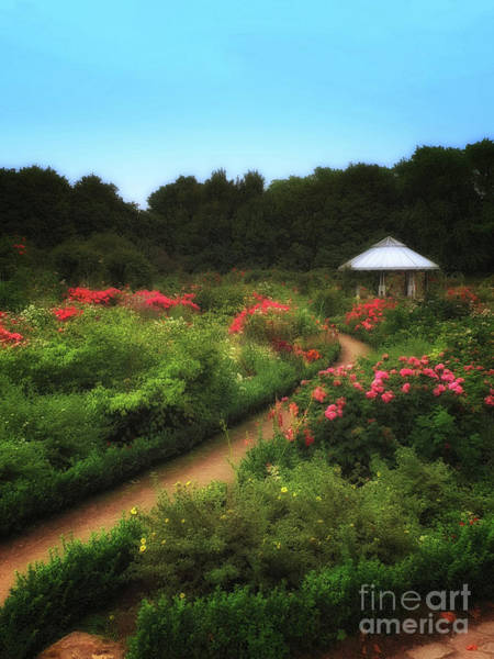 Wall Art - Photograph - Romantic Rose Garden by Yvonne Johnstone
