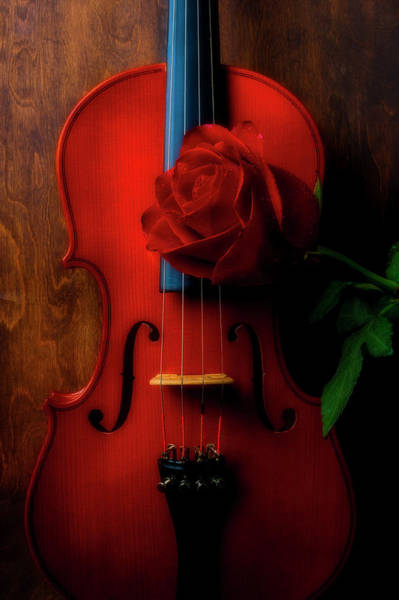 Wet Rose Wall Art - Photograph - Romantic Rose With Violin by Garry Gay