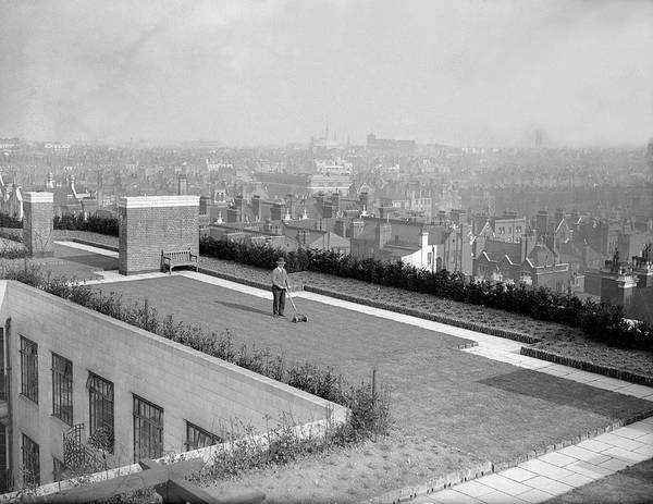Mature Adult Photograph - Rooftop Garden by Fox Photos