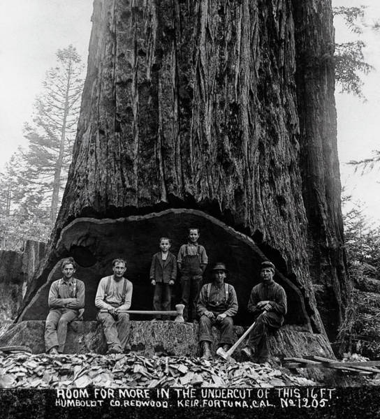 Wall Art - Photograph - Room For More In The Undercut Of A Giant Sequoia C. 1879 by Daniel Hagerman