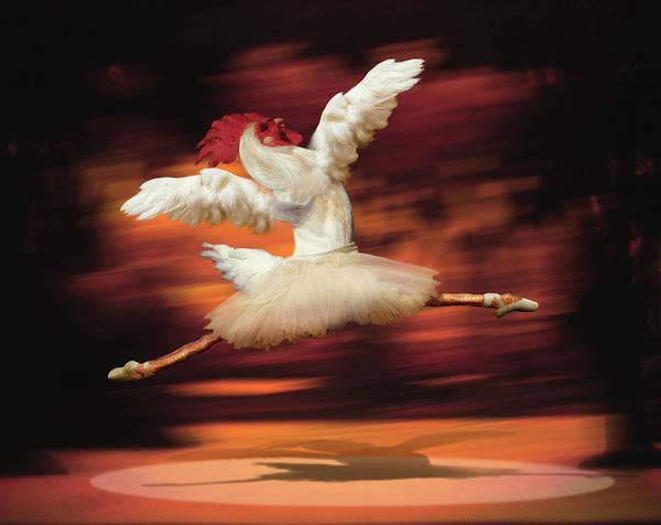 Digital Illustration Digital Art - Rooster Dancing Ballet by Barry Downard