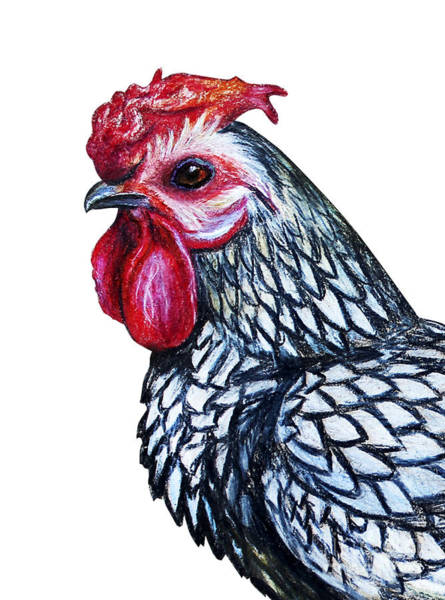 Wall Art - Digital Art - Rooster Decorative Portrait Drawing by Viktoriya art