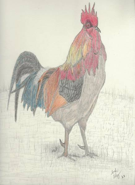 Cuckoo Drawing - Rooster by Joshua Coley