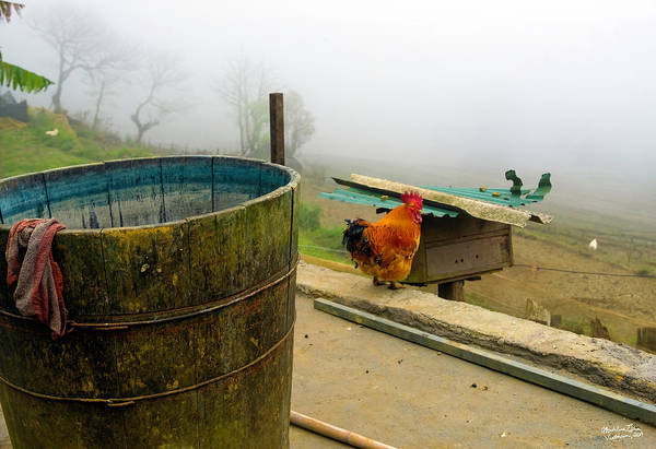 Wall Art - Photograph - Rooster Sa Pa, Vietnam Style by Madeline Ellis