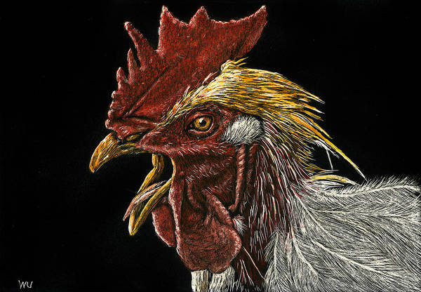 Drawing - Rooster by William Underwood