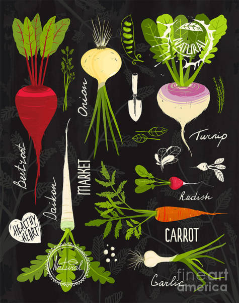 Organic Garden Wall Art - Digital Art - Root Vegetables With Leafy Tops Set For by Popmarleo