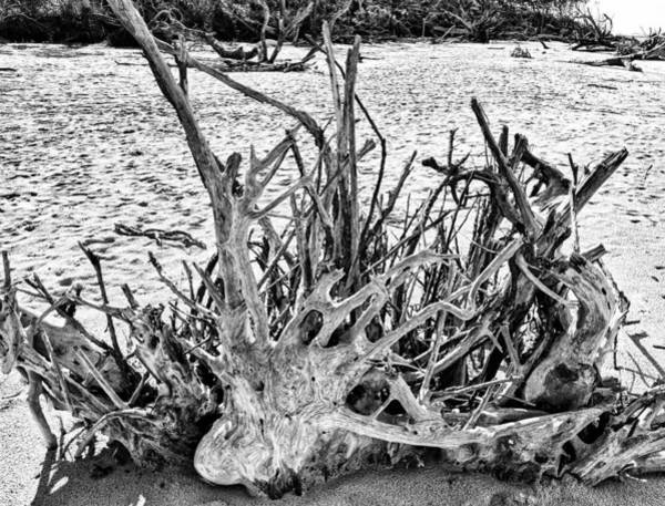 Photograph - Rooted In Black And White by Portia Olaughlin
