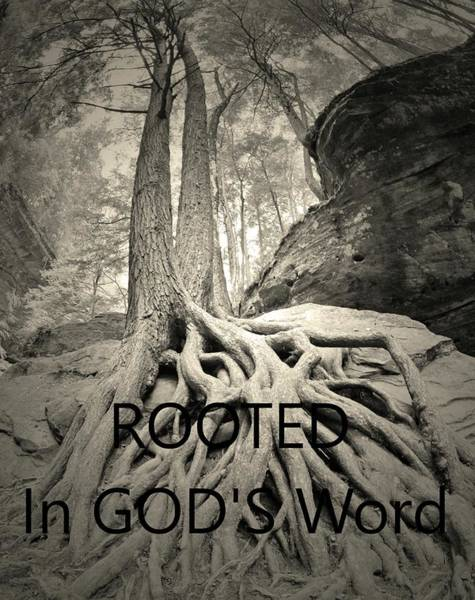 Photograph - Rooted In God's Word Black And White by Lisa Wooten