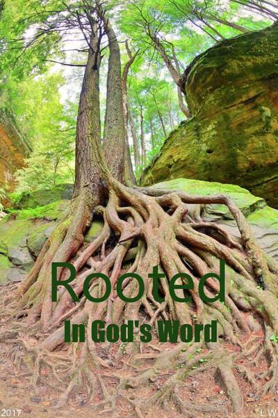 Rooted In God's Word Art Print
