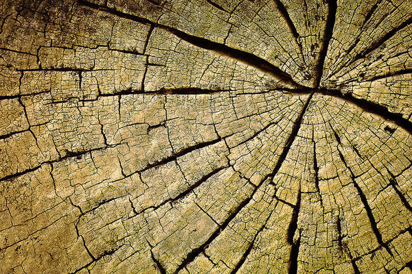 Cracked Photograph - Roots by Dr Feelgood ®