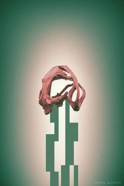 Figurative Abstract Photograph - Rose - Abstract Geometric Frog Skull Art by Joseph Westrupp