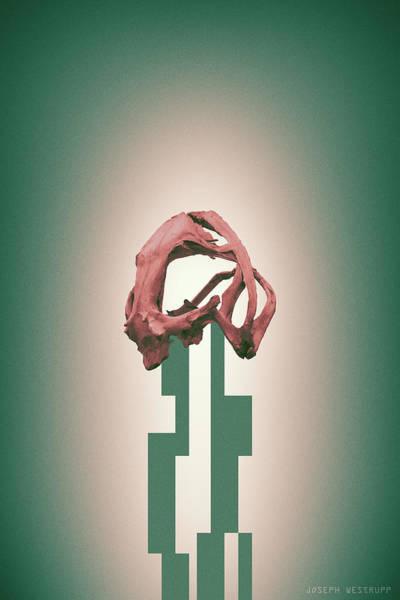 Photograph - Rose - Abstract Geometric Frog Skull Art by Joseph Westrupp