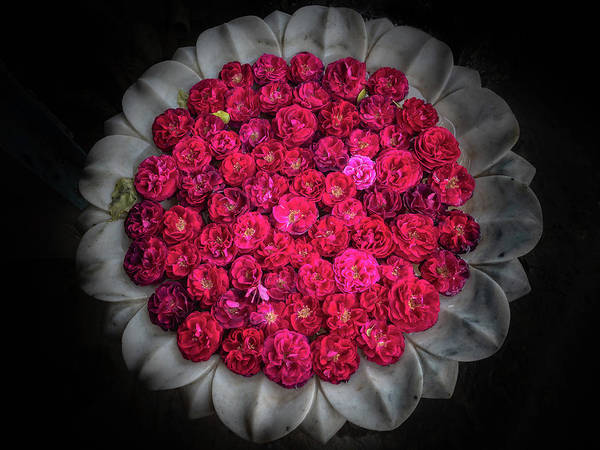 Photograph - Rose Bowl by Robin Zygelman