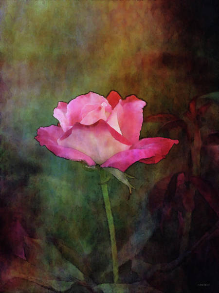 Photograph - Rose Bud 5492 Idp_2 by Steven Ward