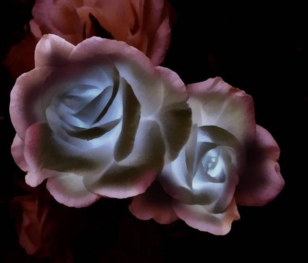 Digital Art - Rose Duo Lit by Catherine Lott