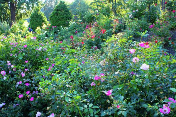 Wall Art - Photograph - Rose Garden  by Art Spectrum