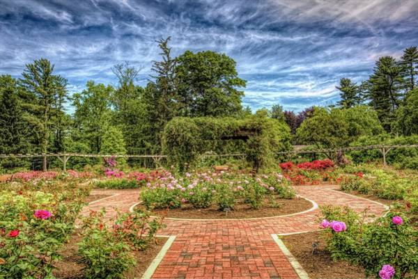 Wall Art - Photograph - Rose Garden At Colonial Park In Somerset, New Jersey Collection by Geraldine Scull