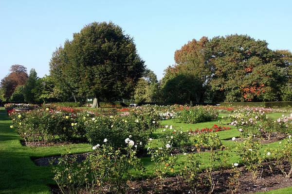 Photograph - Rose Garden At Greenwich Park, London by Aidan Moran