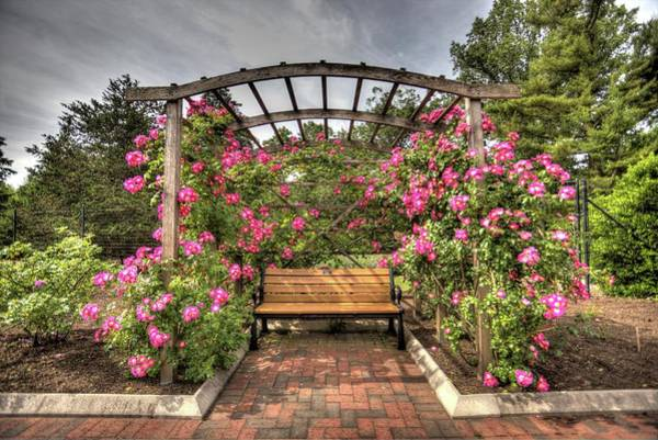 Wall Art - Photograph - Rose Garden Series From Colonial Gardens In Somerset, New Jersey by Geraldine Scull