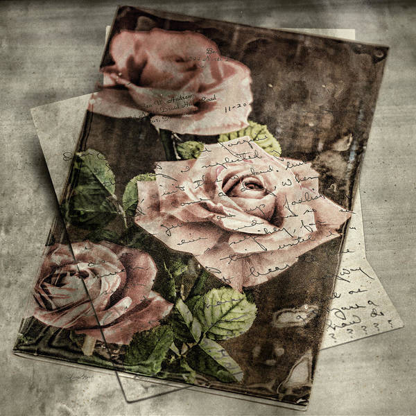 Photograph - Rose Love Letters by Sharon Popek