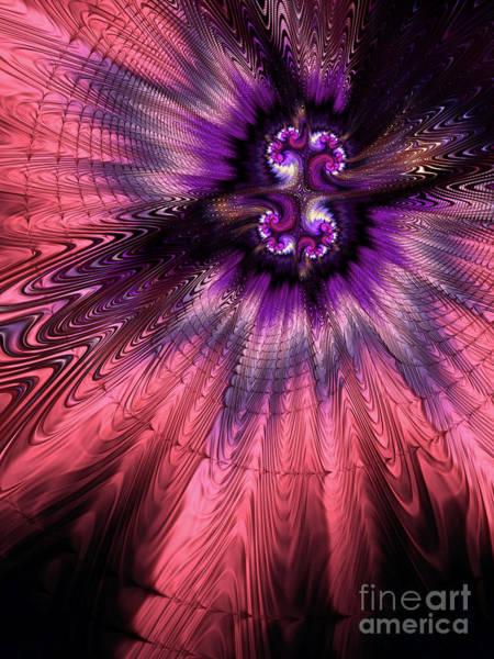 Web Digital Art - Rose Nova by John Edwards