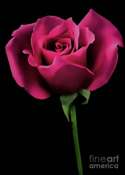 Digital Art - Rose On Black by D Hackett