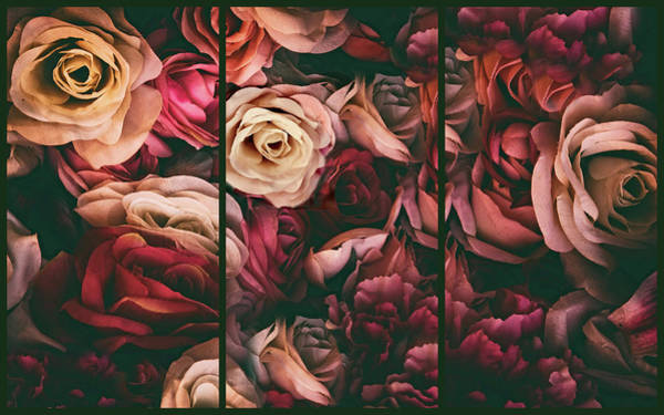 Wall Art - Photograph - Rose Petal Triptych by Jessica Jenney