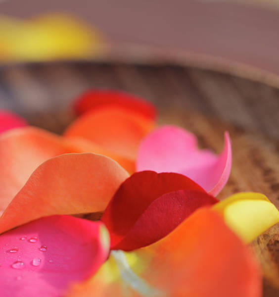 Rose Bowl Photograph - Rose Petals In Wooden Water Bowl by Gregor Schuster