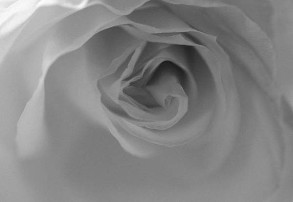 Photograph - Rose - Poetic In Black And White by Marianna Mills