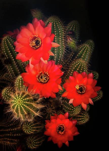 Wall Art - Photograph - Rose Quartz Flowers by Saija Lehtonen