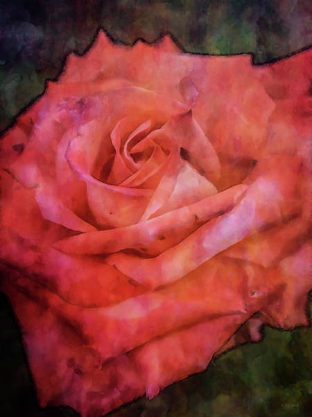 Photograph - Rose Rouge 4684 Idp_2 by Steven Ward