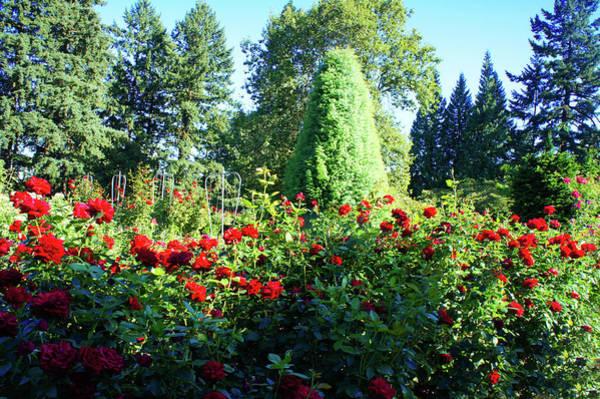 Wall Art - Photograph - Rose Test Garden, Oregon by Art Spectrum