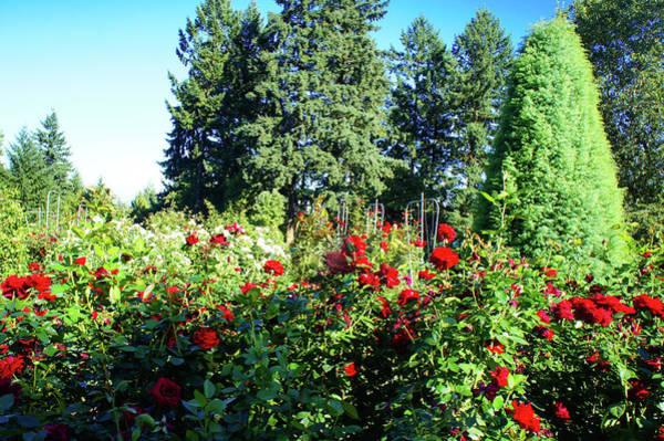 Wall Art - Photograph - Rose Test Garden, Portland by Art Spectrum