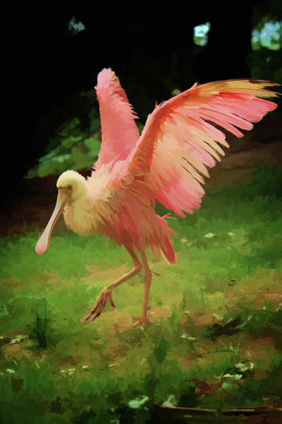 Painting - Roseate Spoonbill - Dwp3553182 by Dean Wittle