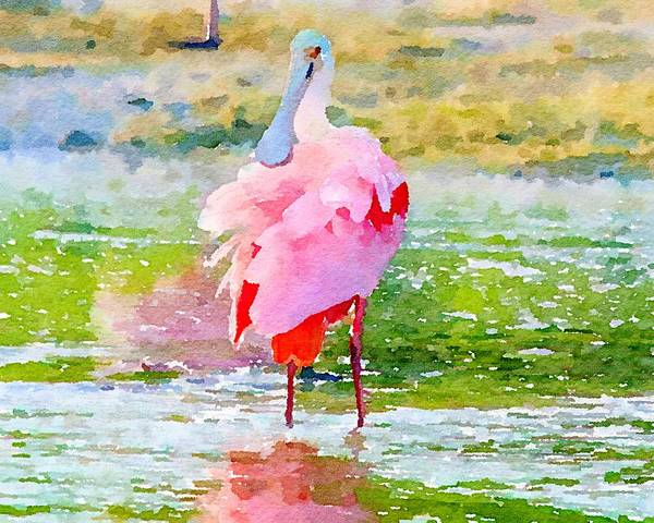 Mixed Media - Roseate Spoonbill Watercolor by Susan Rydberg