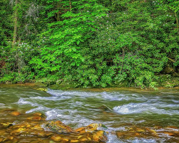 Photograph - Rosebay River by Dale R Carlson