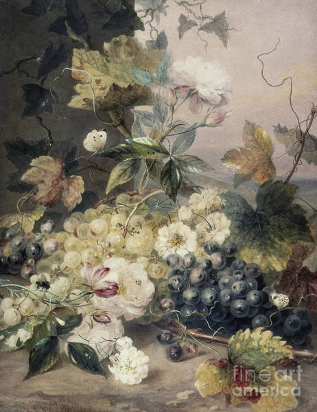Wall Art - Painting - Roses And Grapes by Anne Frances Byrne