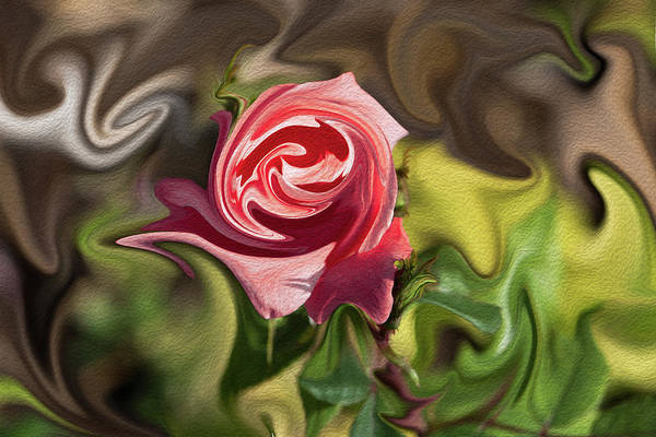 Photograph - Roses Are Red by Jennifer Grossnickle