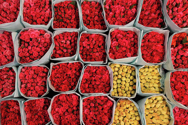 Flower Photograph - Roses At Flower Market  In Bangkok by Bertrand Linet