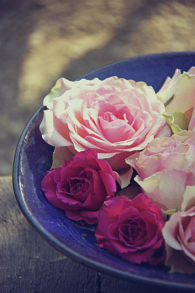 Rose Bowl Photograph - Roses In A Bowl by Helaine Weide