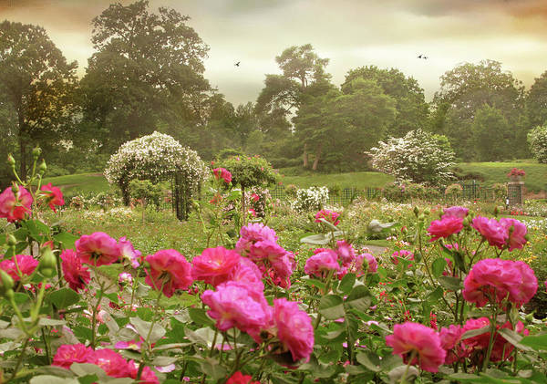 Photograph - Roses In The Mist by Jessica Jenney