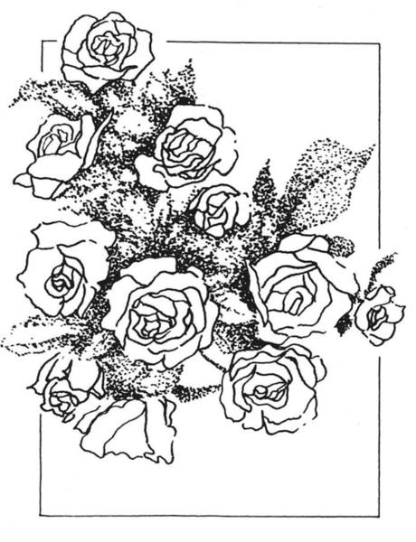 Drawing - Roses by Kevin Heaney
