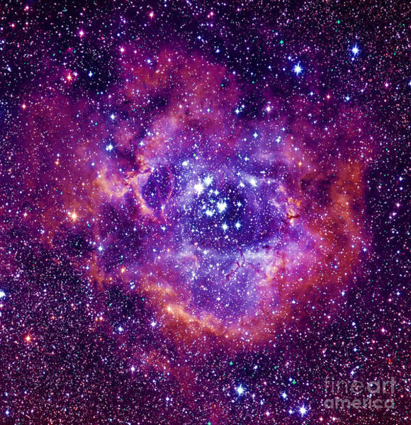 Wall Art - Photograph - Rosetta Nebula by Mironov