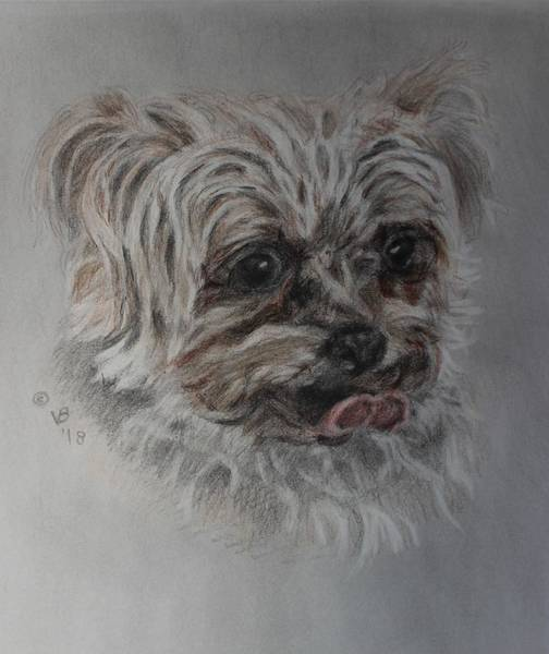 Painting - Rosie by Vera Smith