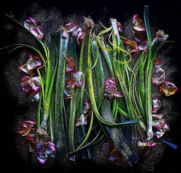 Photograph - Rosy Leeks by Sarah Phillips