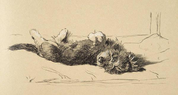 Pup Drawing - Rough Daschund Puppy Detail, 1930 by Cecil Aldin