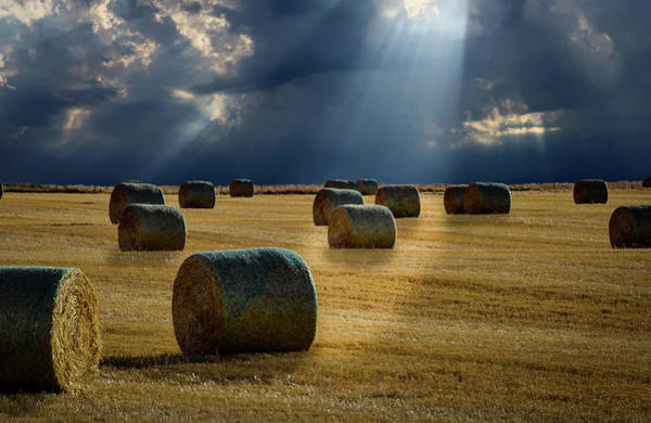 Photograph - Round Bales by Philip Rispin