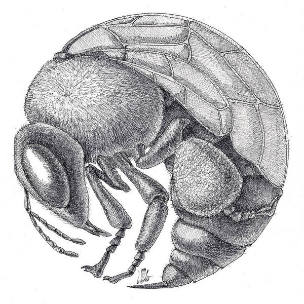 Drawing - Rounded Bee by Victor Molev